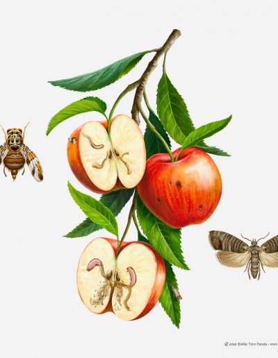 01-ilustracion-plagas-de-la-agricultura