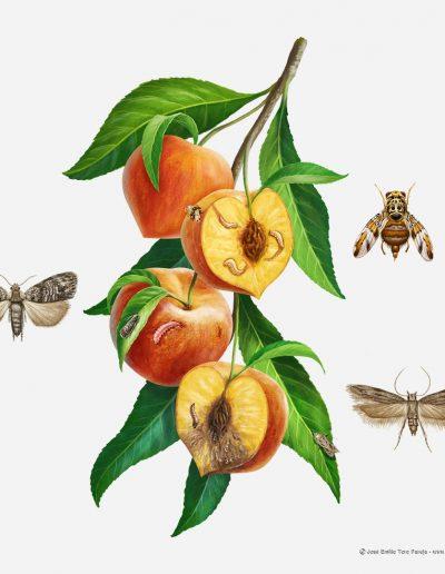02-ilustracion-plagas-de-la-agricultura