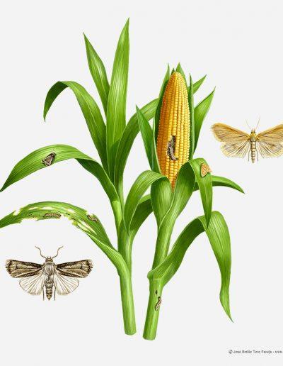 03-ilustracion-plagas-de-la-agricultura