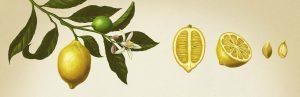 Ilustración The Indi Essencies Collection, Illustration The Indi Essencies Collection