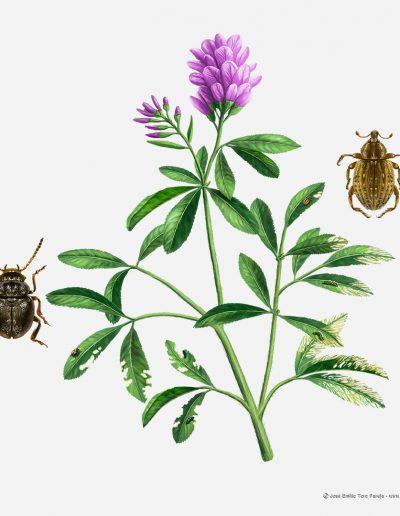 05-ilustracion-plagas-de-la-agricultura