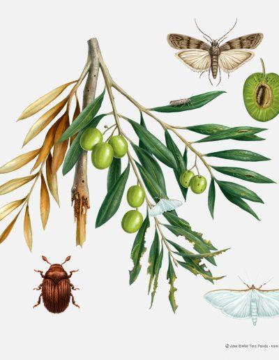 06-ilustracion-plagas-de-la-agricultura