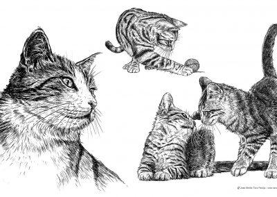 06-ilustracion-tiendanimal